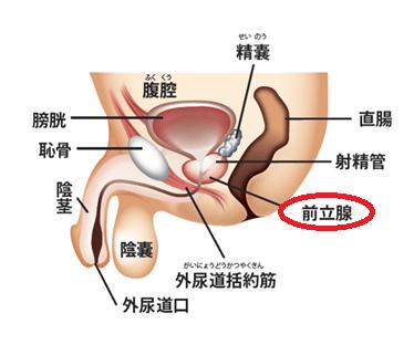 東京港区の泌尿器科 きつかわクリニック前立腺外来│前立腺肥大症 ...